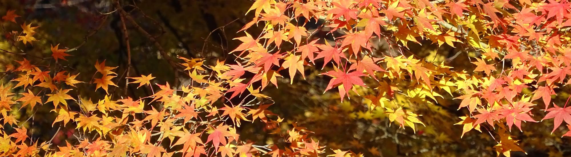 京都教育大学 10月