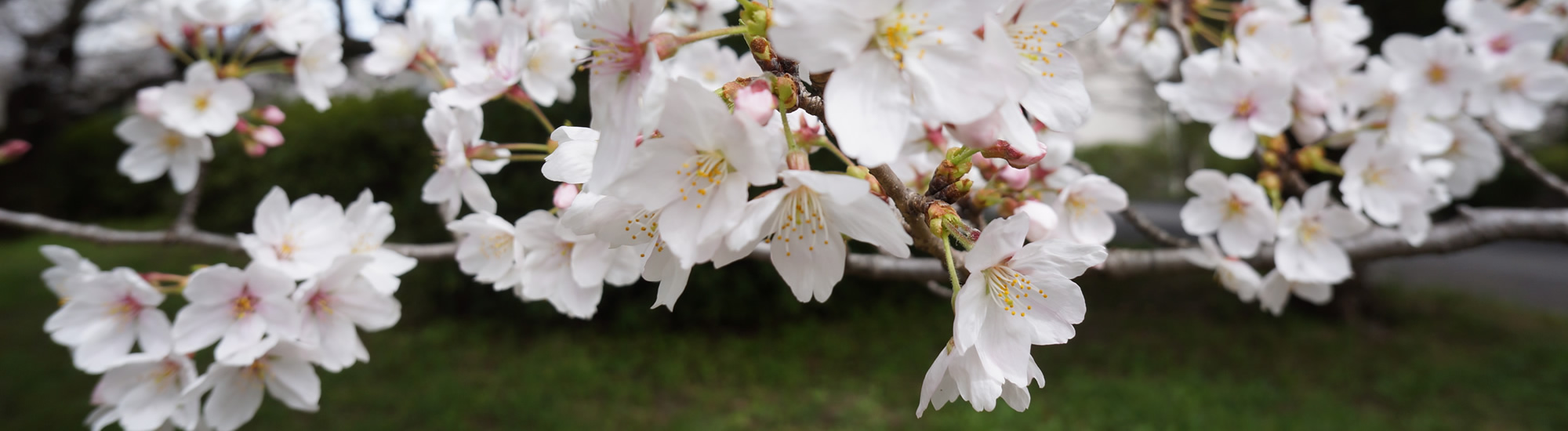 京都教育大学 4月