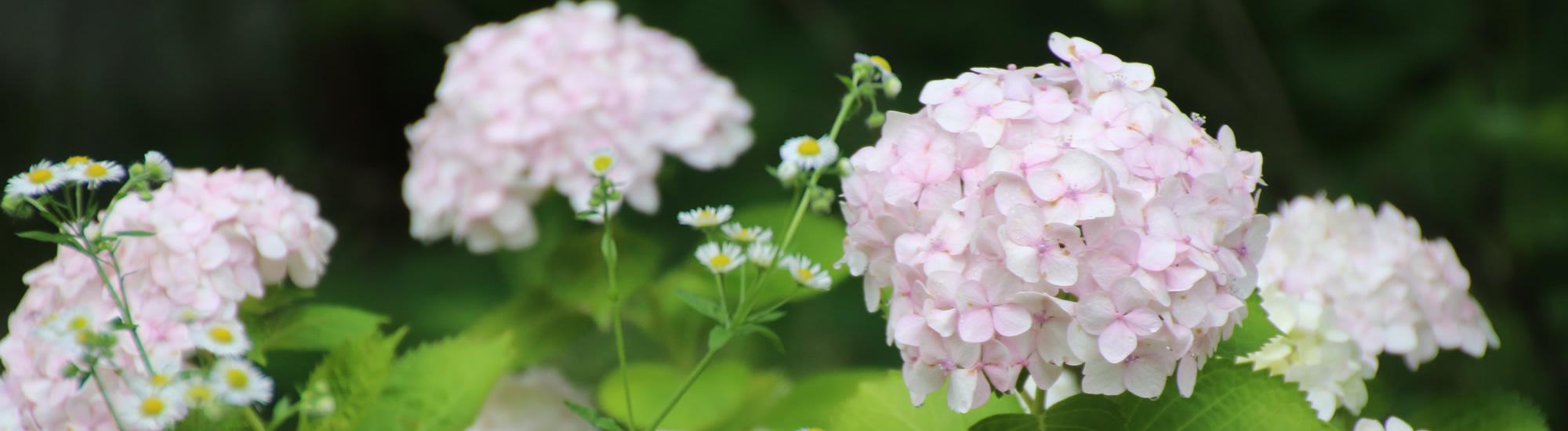 京都教育大学 6月